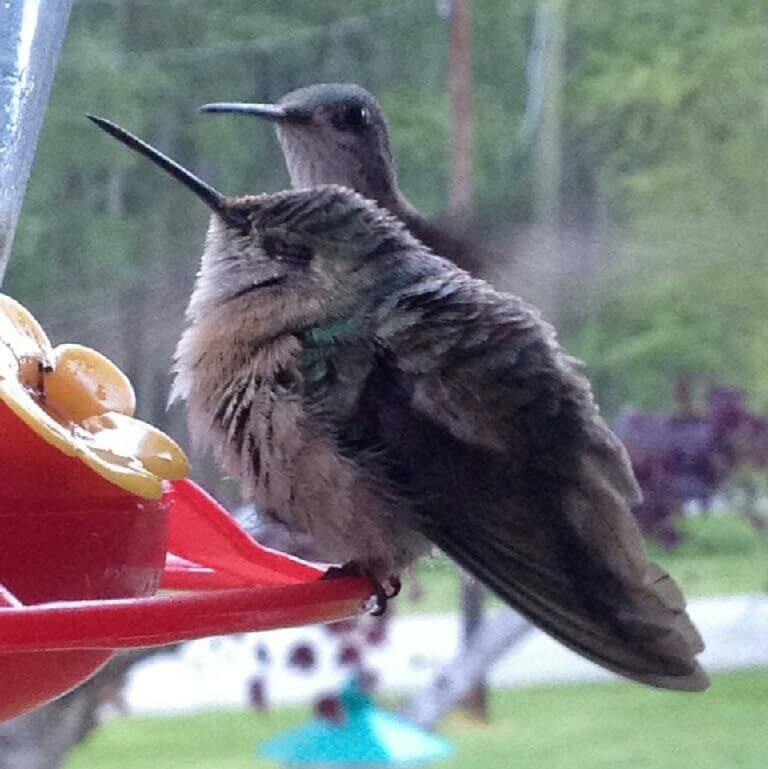 Home of the Hummingbirds